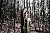 Titel: Forest for the Trees, Kunstenaar: Giles Daoust - NATURE FANTASTIQUE