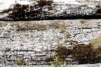 Titel: Landscape One, Kunstenaar: Giles Daoust - NATURE FANTASTIQUE
