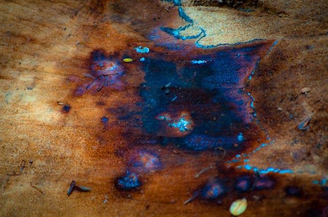 Titel: Smurf Town, Kunstenaar: Giles Daoust - NATURE FANTASTIQUE
