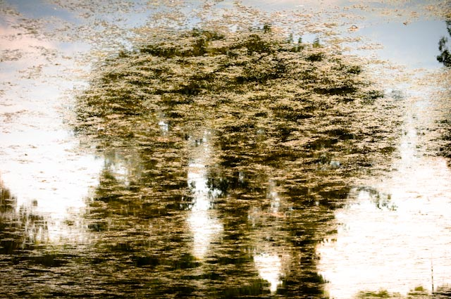 Titel: The Second Degree, Kunstenaar: Giles Daoust - NATURE FANTASTIQUE