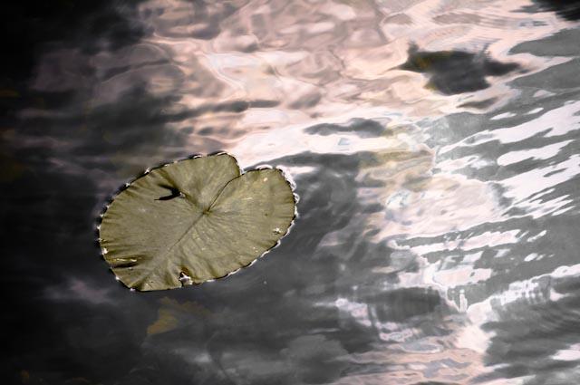 Titel: Adrift, Kunstenaar: Giles Daoust - NATURE FANTASTIQUE