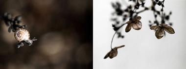 Titel: Escargot, Kunstenaar: Pauline Bertholet - Scents of Nature